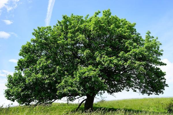 Atem-Meditation: der Lebensbaum schenkt dir Kraft und Halt