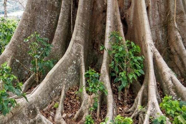 Atem-Meditation: Die Wurzeln des Baumes geben dir Kraft