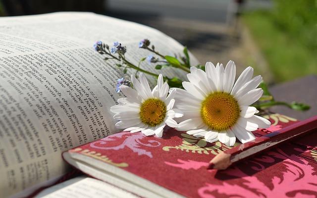 Buch und Lesen